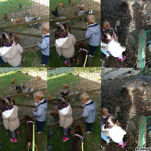 Ce matin les poules les oies et le canard centerblog for Ce que mange les poules